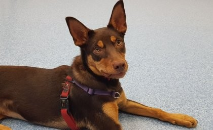 Rescue dogs will be better-matched with their new owners thanks to UQ research.