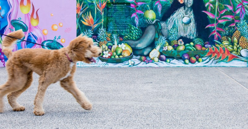 Walk your dog on a lead in Surry Hills, Glebe and Darlinghurst. Photo: Unsplash