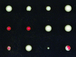 Yeast colonies - the red cells show the silenced phenotype, the white cells don&