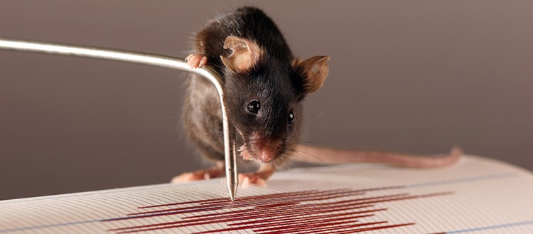 Mechanoreceptors along the bones of the mouse forelimb might act as a seismograp