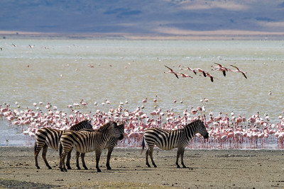 This 2007 photo shows Lake Magadi in Kenya, a carbonate-rich lake whose bed is m