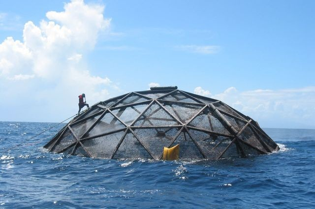 NOAA  										 Divers survey submersible cages used to farm cobia off the coas