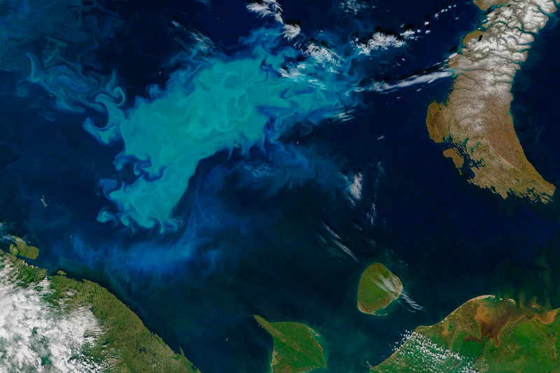 A phytoplankton bloom in the Barents Sea turned surface waters a milky blue in J
