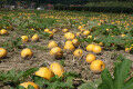 Of Apples and Oil Pumpkins: News from Microbiome Research