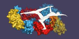 Like an acrobatic duo - single proteins lend each other greater stability. (Ima