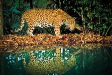 Belize's biodiversity has made it into a top ecotourism destination. The country