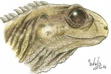 Life image of Clevosaurus Sophie Chambi-Trowell