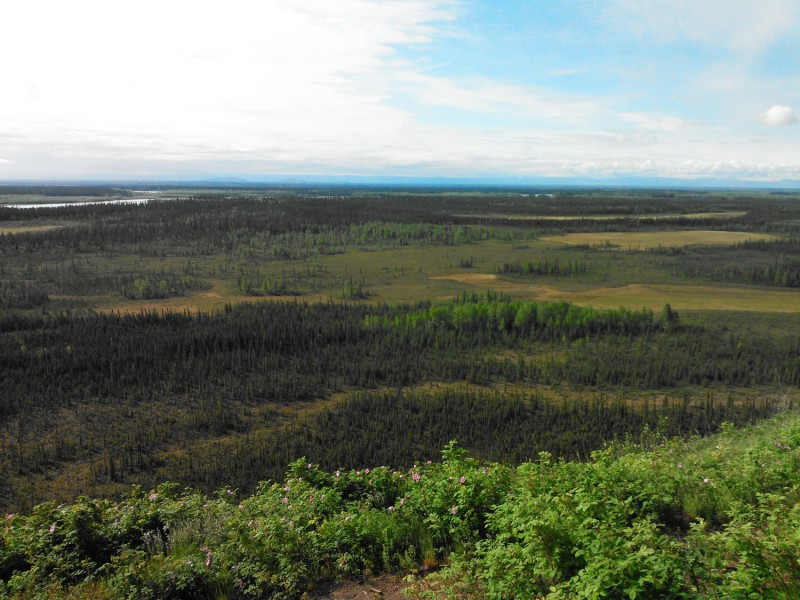 A UW-led team has found that early spring rainfall warms up a thawing permafrost