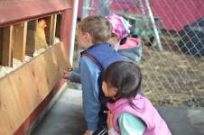 Elementary school students in Palo Alto, California, check for eggs at their sch