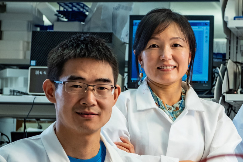 Rice University's Kuichang Zuo (left) and Qilin Li helped develop a highly