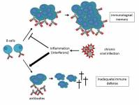 Under the influence of interferons, chronic viral infections cause strong infla