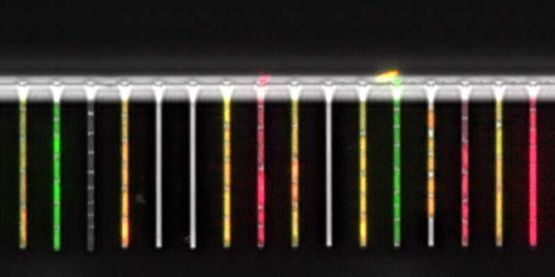 A microfluidic system for tracking growth and gene expression of single bacteri