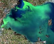 Western Lake Erie and an algae bloom as seen from a Landsat-8 satellite in Septe