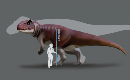 A reconstruction of a Jurassic dinosaur track-maker from southern Queensland in