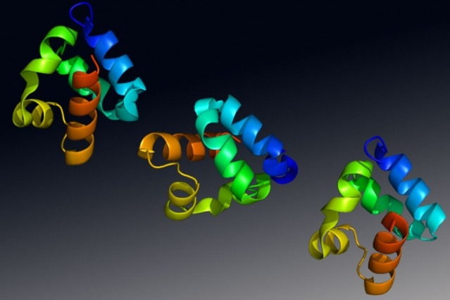 Structure of the Shank3 protein, a gene with a strong association to autism spec
