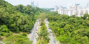 Street trees regulate urban ecosystems in tropical regions such as Singapore (I